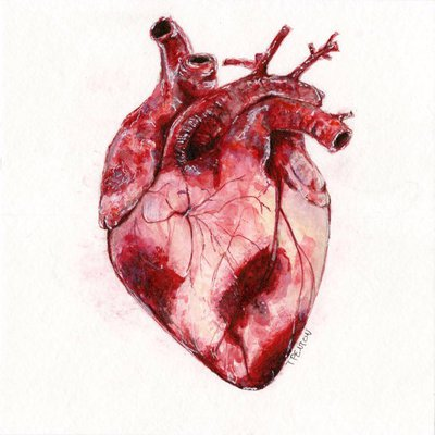 watercolor_human_heart_by_taylorpentonart-d8pgcum